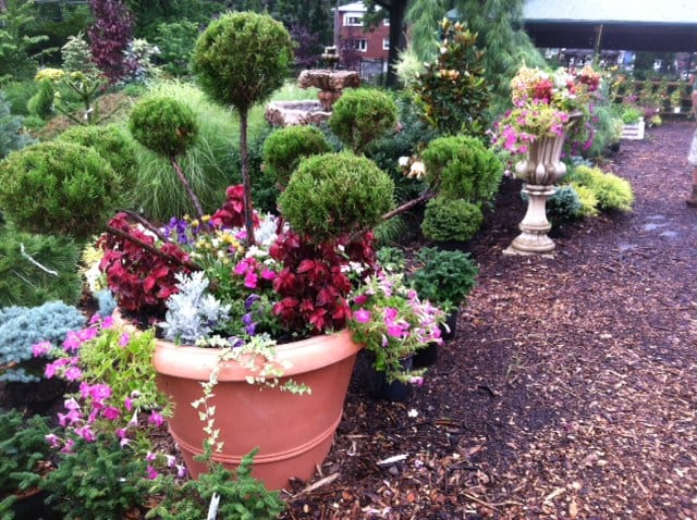 Potted Juniper Planter