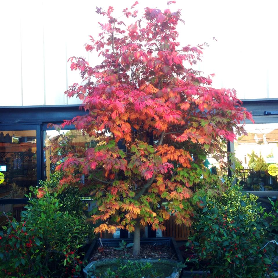 Great fall color