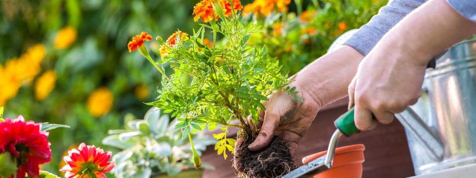 Gardeners-hand-planting-flower-1600x600