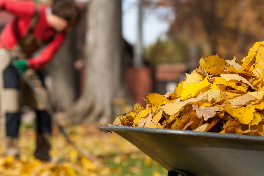 View of autumn leaves in a garden ** Note: Shallow depth of field