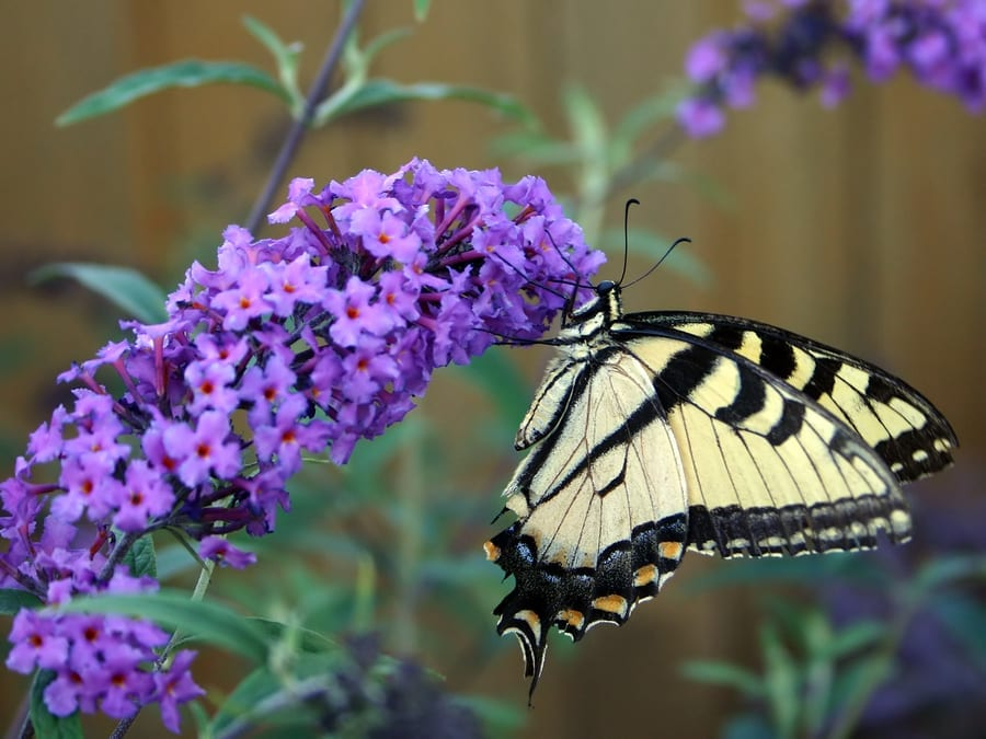 Tips To Attract Butterflies To Your Garden