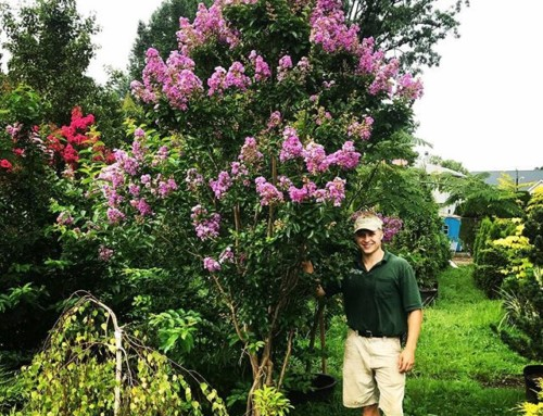 THE BEST TREE FOR SUMMER FLOWERS